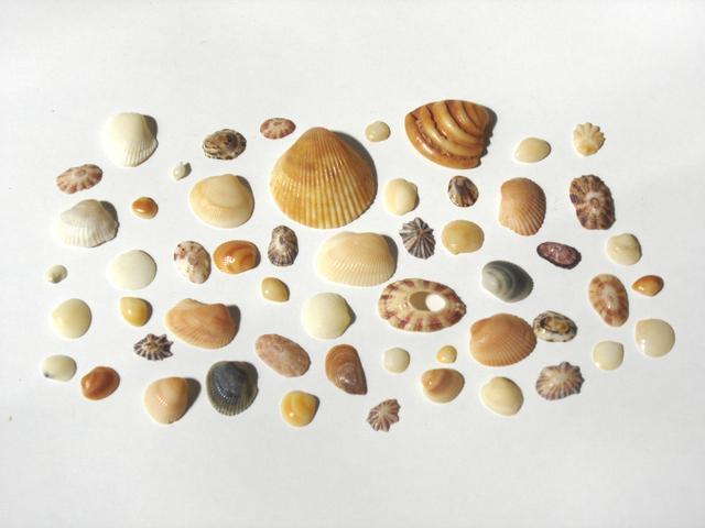 shells-1193518-640x480