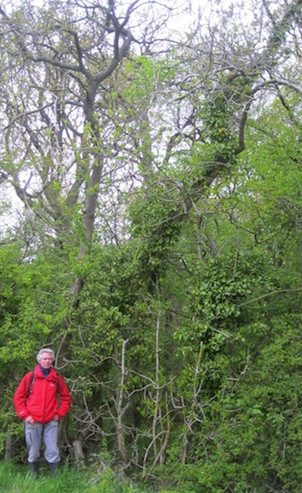 David Boshier and tree 2451 in the Cotswolds
