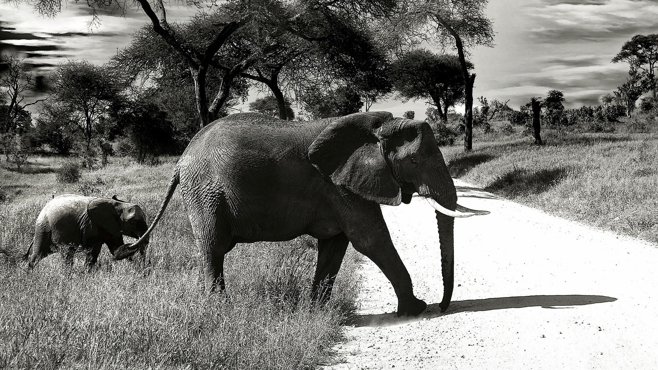 How did elephants evolve such a large brain? Climate change is part of the answer.