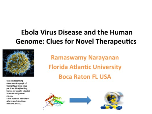 Ebola therapeutics