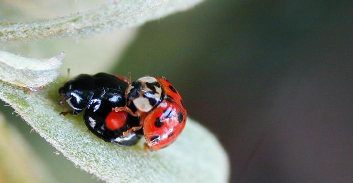 nature.com - Teruyuki Niimi - Nature Research Ecology & Evolution Community
