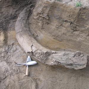 Medium yukon tusker 2008 flemming