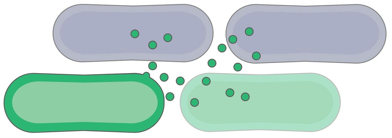 A tale of toxin discovery: a new family of Bacteroidales bacteriocins.