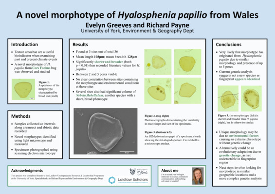 Poster: A novel morphotype of Hyalosphenia Papilio from Wales