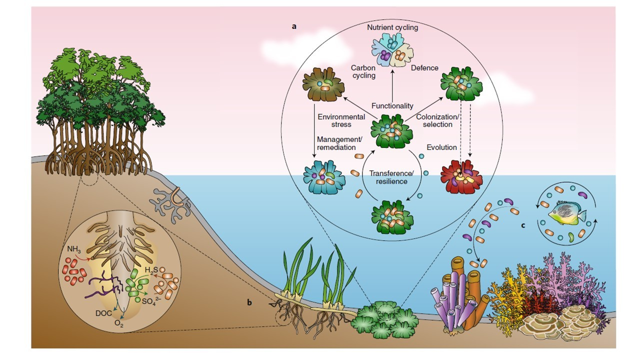 MACROquestions in coastal MICRObiome science