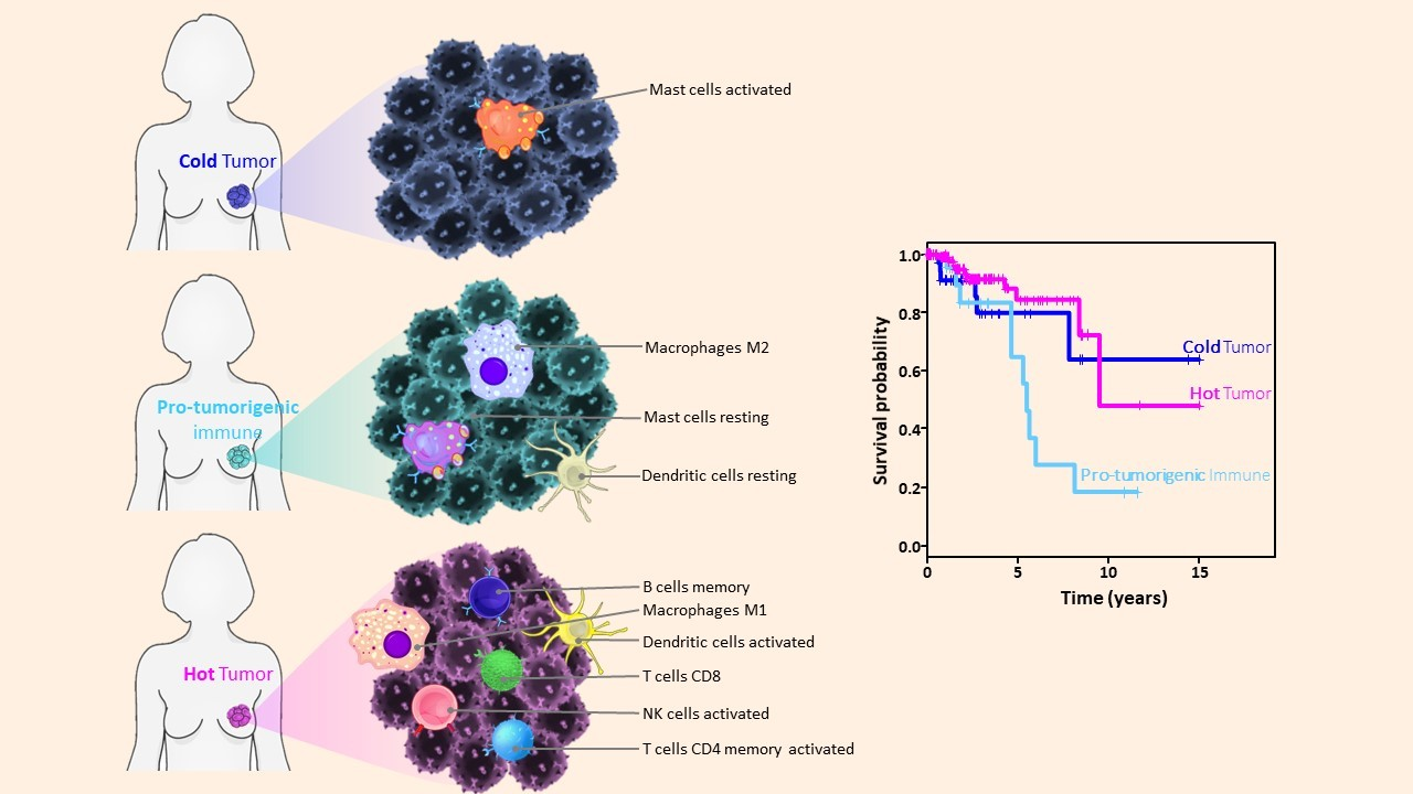 Discovery of a new breast cancer subtype