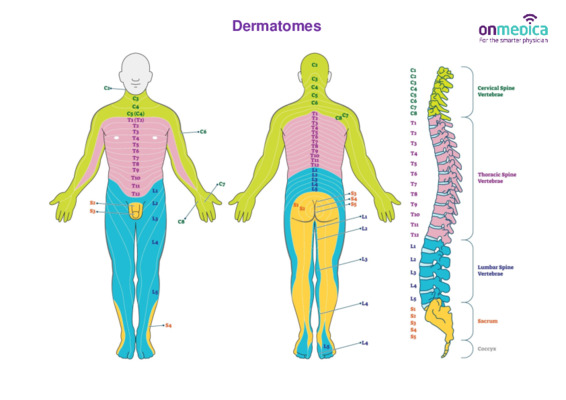 Skin dermatome guide