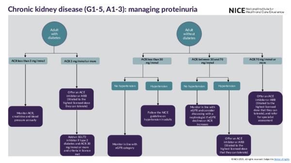Visual summary: CKD (G1-5, A1-3)—managing proteinuria