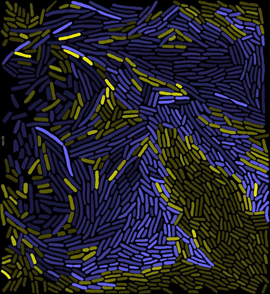 Molecular / Cellular Biology  - cover
