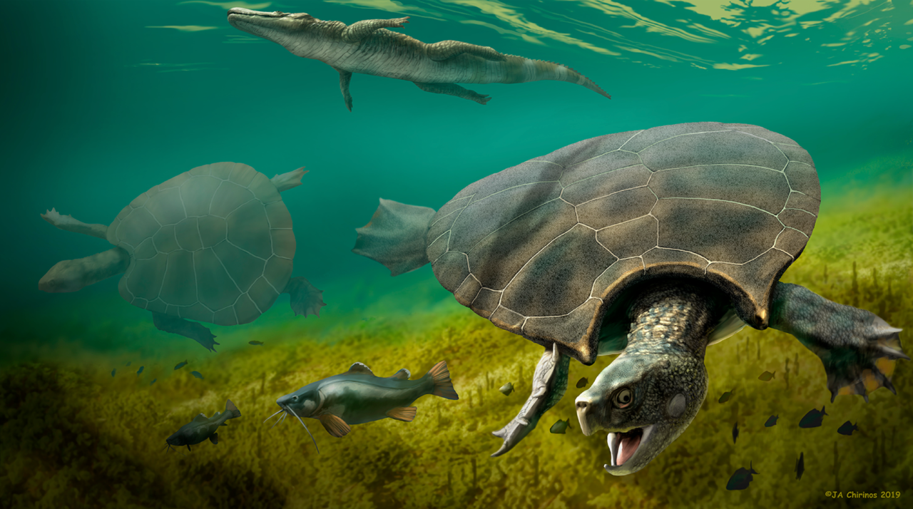 The anatomy, paleobiology, and evolutionary relationships of the largest extinct side-necked turtle