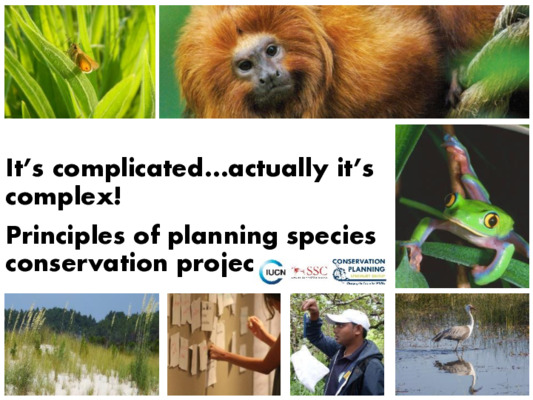 Principles of planning species conservation projects