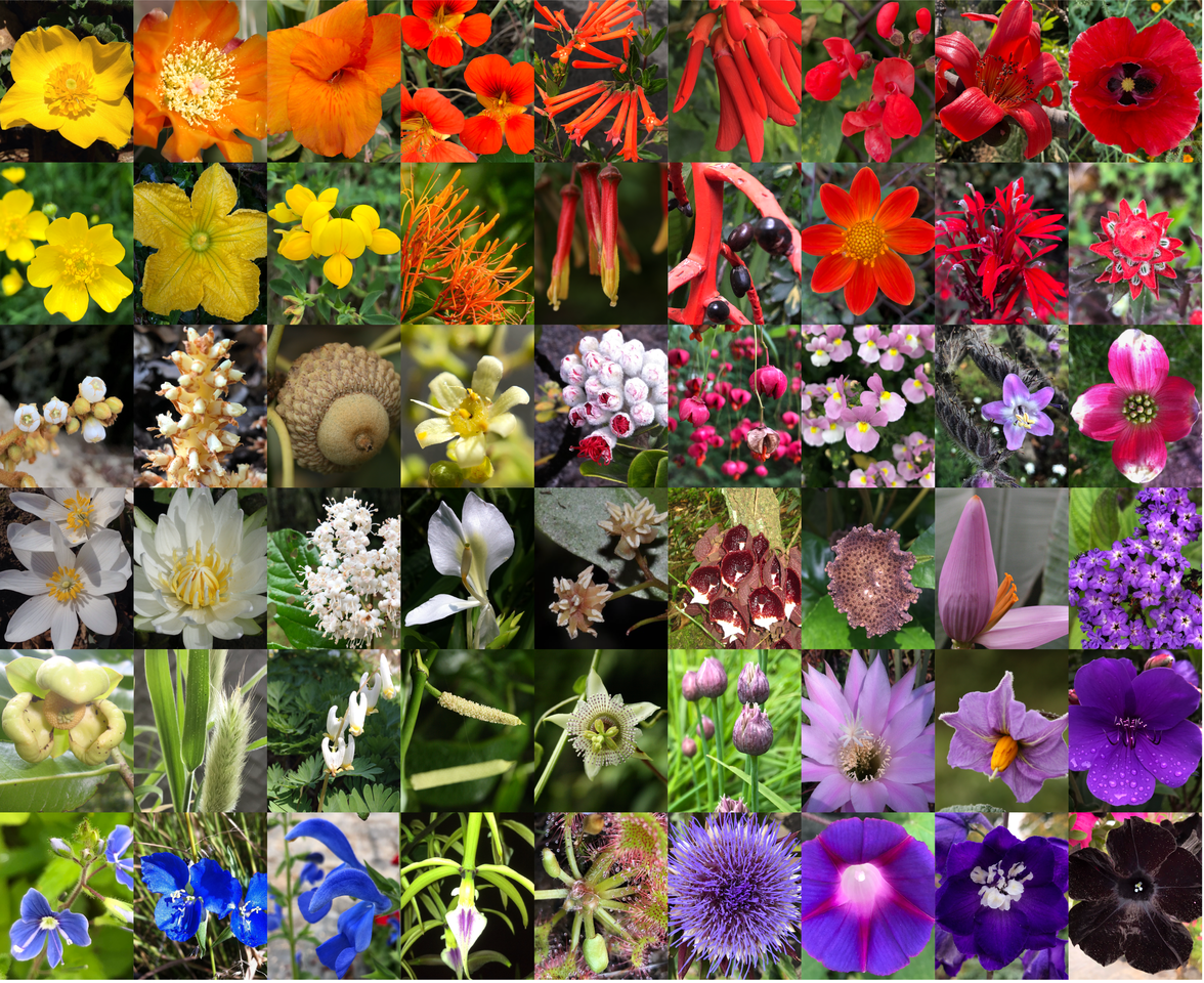 The delayed rise of flowering plants