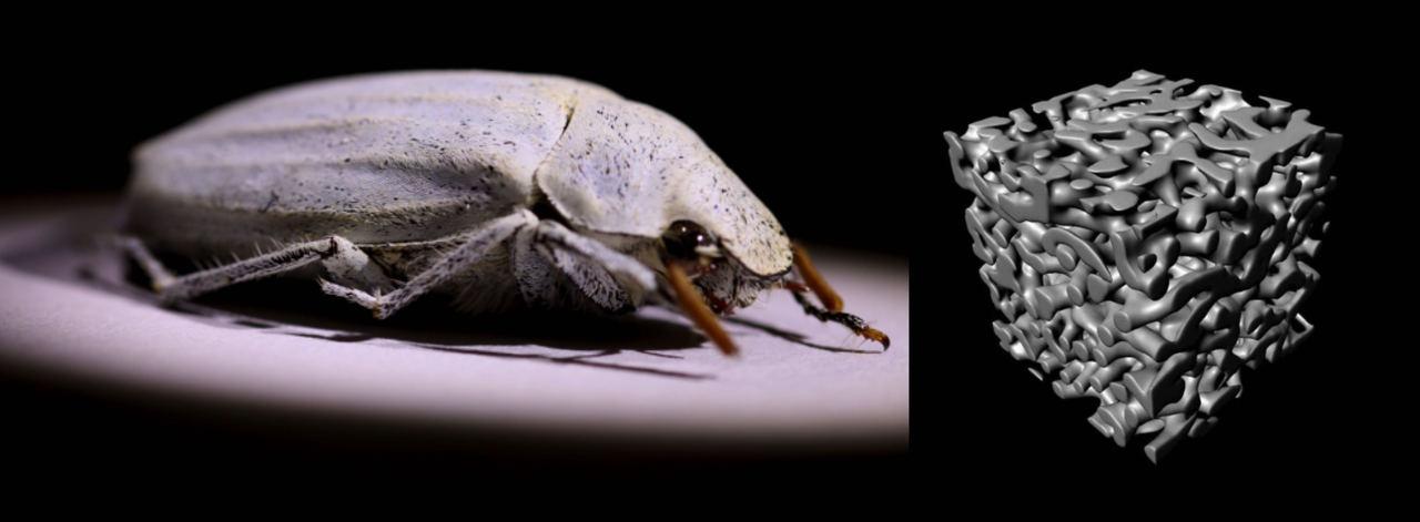 Whiter than White - Beetle inspired ultrawhite