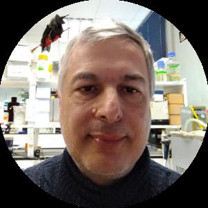Go to the profile of Adolfo Saiardi