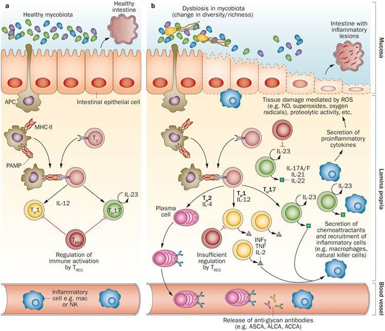 Gut Microbiota Beyond Bacteria Nature Research
