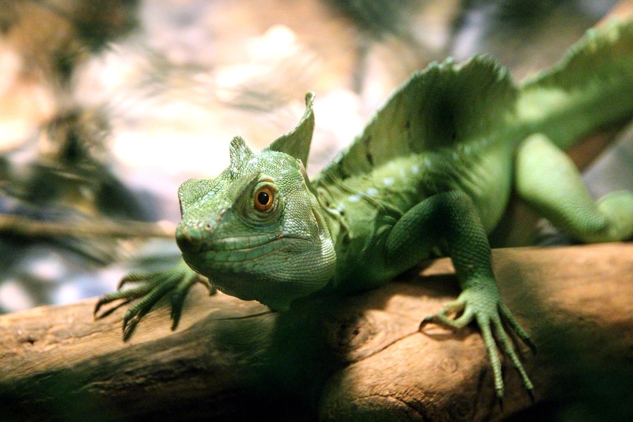 A paleontological gold mine to understand the radiation of reptiles