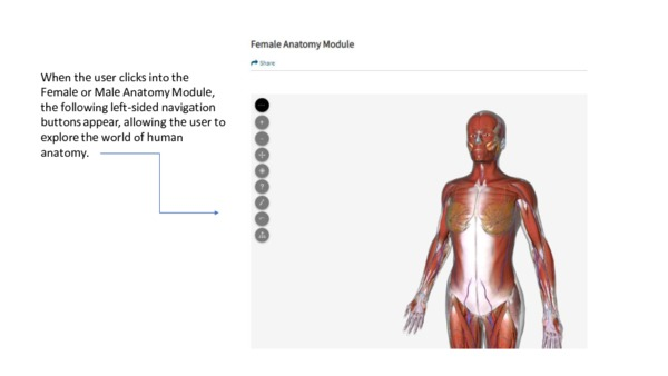 Human Anatomy Module Tutorial Slides